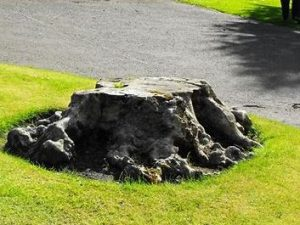 Why Hire Professional Stump Removal Services Sydney